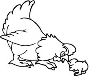 galinhapintinho